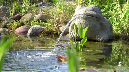 なだめる : water-spouting frog at the garden pond