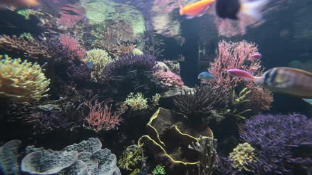 reef life : Underwater scene with colorful tropical fishes and corals