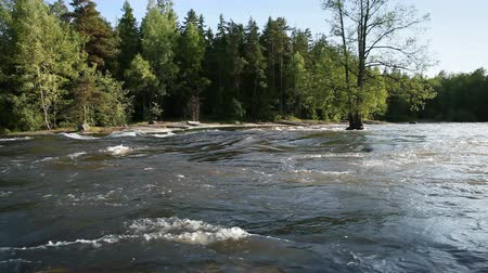 fince : Summer landscape of Kymi in Finland, fast river water motion along coastal forest
