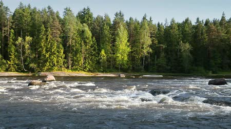 finlandês : Natural landscape of Kymi in Finland, fast river water motion along coastal forest