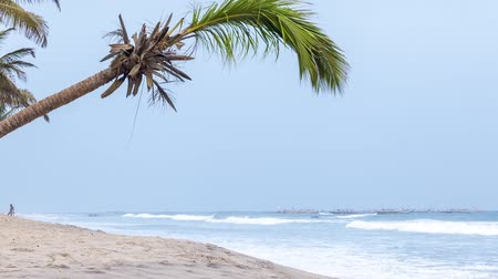 Beautiful, paradise beach with palm trees, West Africa