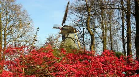 holandês : Windmill in the park Keukenhof, the worlds largest flower garden, situated near Lisse, the Netherlands. . Stock Footage