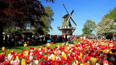 tulipany : LISSE, THE NETHERLANDS - MAY 05 2016: Park Keukenhof,  the worlds largest flower garden, situated near Lisse, the Netherlands.