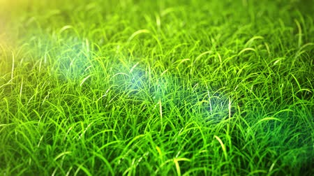 grass field close-up Vídeos