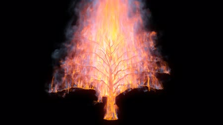 Burning Tree con canale alfa Filmati Stock