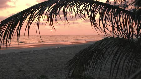 Beautiful pink sunset over sea on the beach with palm leaves, background. Dostupné videozáznamy