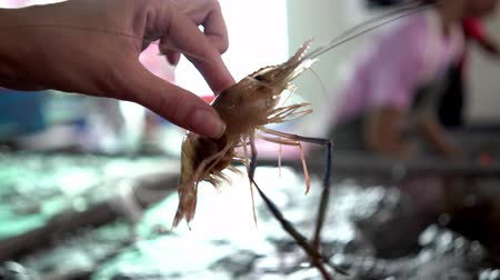 охлажденный : Big fresh live shrimp in hand close up at fish market.