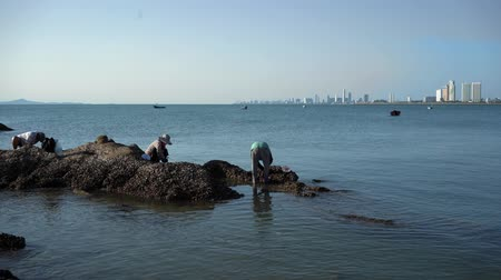 People on stones on the seashore collect mussels, shells, seafood.