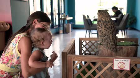 Mom shows the baby an owl. baby strokes an owl. Dostupné videozáznamy