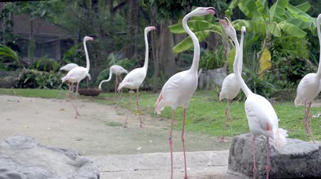 greater : A group of flamingo birds on a lake in a zoo. Concept of animals in the zoo.