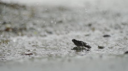 obojživelník : Sad frog sits under heavy tropical rain