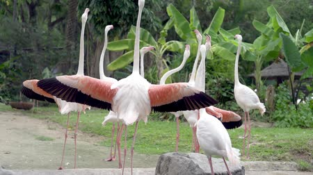 flamenco : A group of flamingo birds on a lake in a zoo. Concept of animals in the zoo.