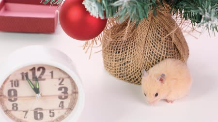 tebrik etmek : rat with colorful Christmas balls and Christmas tree, a symbol of the new year 2020. New Year concept.