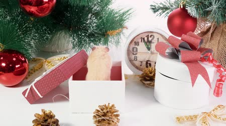 tebrik etmek : Happy new year 2020. Christmas composition with a rat, a symbol of the year. Rat near the Christmas tree, gift boxes and watches Stok Video