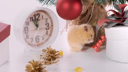 horoszkóp : New Year concept. Cute white domestic rat in a New Years decor. Symbol of the year 2020 is a rat