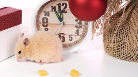 tebrik etmek : The symbol of the new year 2020 is a rat near the New Year tree, watches and gifts. New year concept. Stok Video