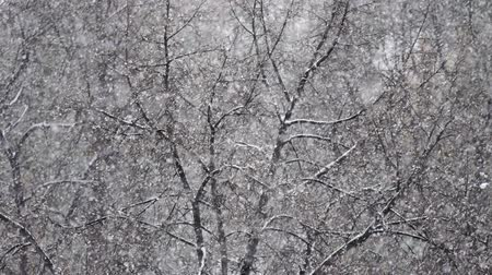 snow flurry : snow flakes on a background of trees