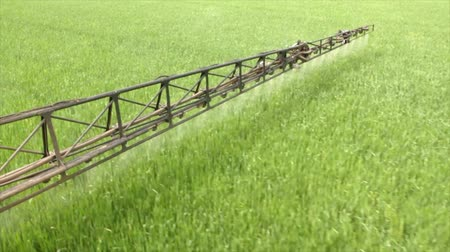 püskürtücü : the sprayer sprays young wheat on the field Stok Video