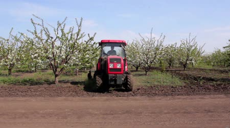 carcinogenic : Tractor sprayer sprays cherry orchard