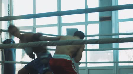 contender : sparring of two young boxers on the ring