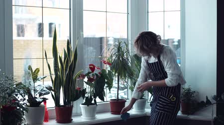 temizleme maddesi : Young beautiful woman housewife weared in white sweater and apron eyeglasses, tired of cleaning window, turn and looking in to the camera, she shows a tired face middle shot 4K