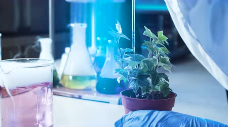ученый : Anonymous person in gloves dropping chemicals in pot with plant while working in lab.