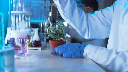 holding onto : Chemist doing tests in a laboratory carefully pipetting a chemical solution onto a potted plant with an array of colored test tubes, beakers and a microscope in front of him