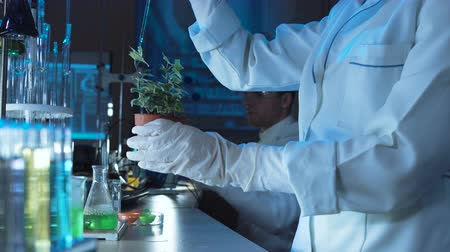 holding onto : Scientist doing experiments on a potted plant in a chemical laboratory pipetting a solution onto the top leaves in a close up view of his hands with lab glassware visible behind. Stock Footage