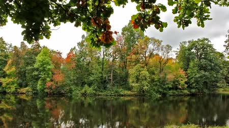 peaceful : Autumn view of the forest and river Stock Footage