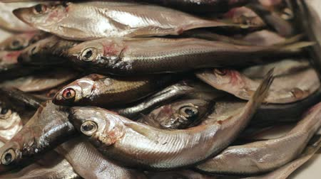 sprat : Pile of raw herring Stock Footage