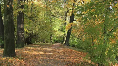 yol : Autumn path in the park Stok Video