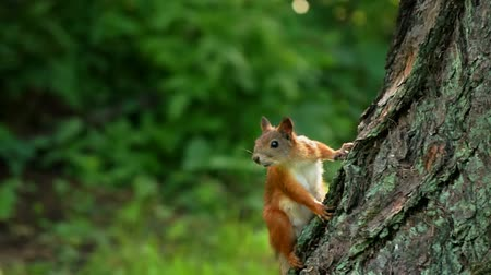 spojrzenie : Squirrel looks around carefully