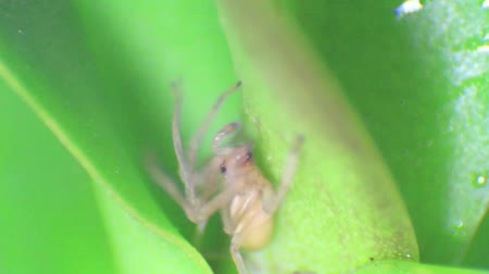 Macro footage of spider on orchid leave. hd video