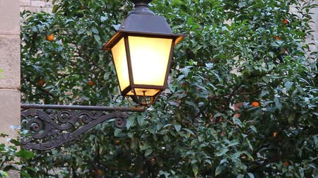 Street lamp with an orange tree on a background. HD video Wideo