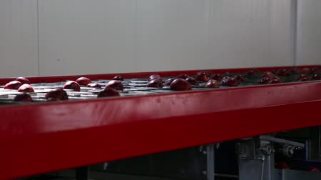 anlagen : Sort line for calibration of apples. The work of the sorting line. Red Apples Red Chiff