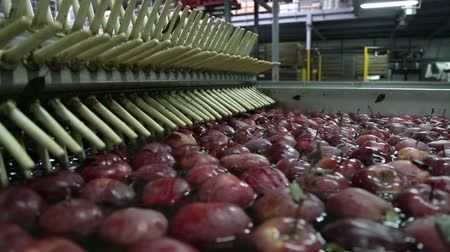 empaque : Apples Floating in Water in Packing Warehouse. Red apples are sorted and washed.