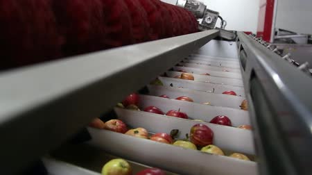 pronto a comer : Clean and fresh apples on conveyor belt in food processing facility, ready for automated packing. Healthy fruits, food production and automated food industry concept. Stock Footage