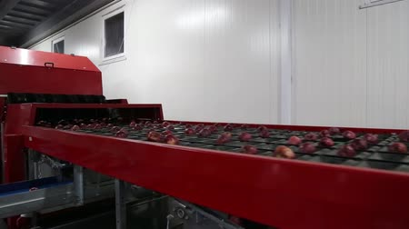 tür : Clean and fresh apples on conveyor belt in food processing facility, ready for automated packing. Healthy fruits, food production and automated food industry concept. Stok Video