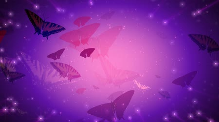 owady : Butterflies and sparkles. HD 1080 seamless looping video animation.-