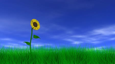 dmuchawiec : Sunflower gently swaying in the breeze with blue sky, clouds and grass. 3D animation, seamless looping animation.-