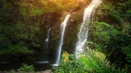 paisaje selva : Cascadas tropicales en el frondoso bosque de Maui, Hawaii. Filmada en alta definición 1080p. Perfecto video perfecto bucle. - Archivo de Video