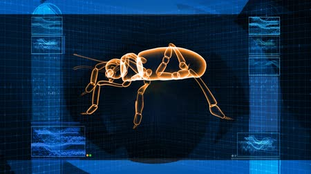 owady : High tech 3D animation of insect, seamless looping video.- Wideo