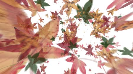 проливая : REAL Maple leaves blowing away in windy vortex. Real leaves scanned at 600dpi.  (Seamless HD Loop)-