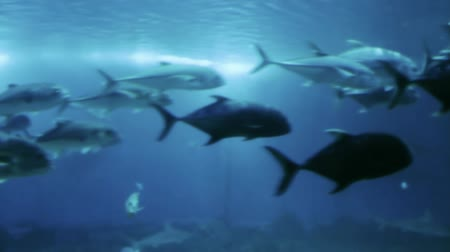 hammerhead : Lots of various fish, sharks, rays swimming around in a huge sea water aquarium.