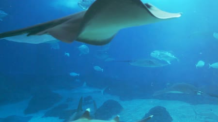 hammerhead : Lots of various fish, sharks, rays swimming around in a huge sea water aquarium.-