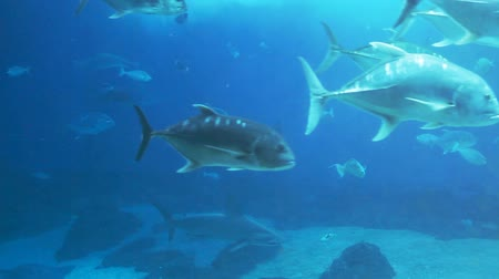 hammerhead shark : Lots of various fish, sharks, rays swimming around in a huge sea water aquarium.-
