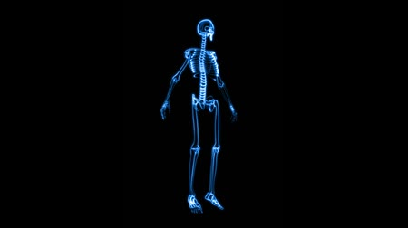 forma tridimensional : This aniamtion shows incredible translucent detail of the human skeleton in 3D. Seamless looping video animation of X-Ray of Human skeleton on high tech background (HD).-