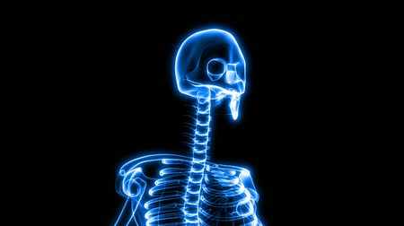 gaiola : This aniamtion shows incredible translucent detail of the human skeleton in 3D. Seamless looping video animation of X-Ray of Human skeleton on black background (HD).-