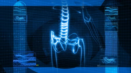 kalça : This version focuses on the lower back and hips. Seamless looping video animation of X-Ray of Human skeleton on high tech background (HD).- Stok Video
