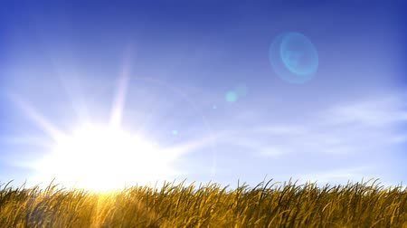 natura : Blue sky, light clouds, slight breeze and wheat field. HD seamless looping video animation.-
